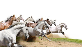 Herd on white Stock Photography