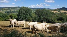 Hillside Farm royalty free stock photos