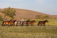 Herd of wild horses Royalty Free Stock Photo