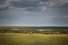 Herd of wild horses in a field Stock Photos