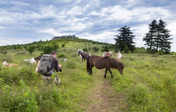 Herd Wild Ponies Grayson Highlands VA Photographer Stock Images