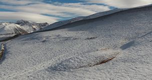 A herd of wild sheep. A herd of wild sheep in the mountains based in Kyrgyzstan stock video
