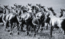 A herd of young horses stock image