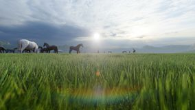 A herd of young horses graze on a picturesque green meadow on a beautiful summer morning. 3D Rendering. A herd of young horses graze on a picturesque green stock illustration