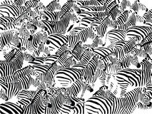 Herd of zebras Stock Photography