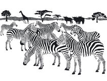 Herd of Zebras. An illustration of a herd of zebras on a savanna setting Royalty Free Stock Photos