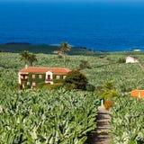 A herdade velha em uma plantação de banana Fotos de Stock Royalty Free