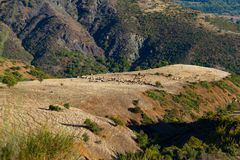 Herdar och betande får och getter på bergplatå i Royaltyfria Bilder