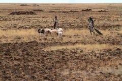 Herdar och får i Kenya Arkivfoto