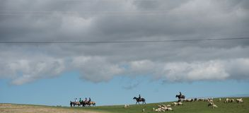 Herdar och får under molnen arkivfoton