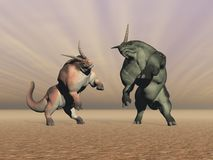 Herdbeasts fight. Two herdbeasts fighting in brown background Stock Photo