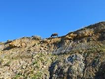 Herde in den Felsen stockbild
