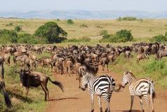 Herde der Antilopen Gnu und Zebras Stockfotografie
