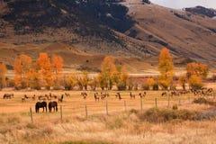 Herde der Elche, die Feld mit Pferden teilen Lizenzfreies Stockbild
