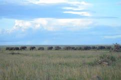 Herde der Elefanten lizenzfreies stockbild