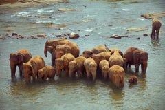 Herde der Elefanten, die Bad im rauen Fluss nehmen Stockfotografie
