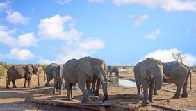 Herde der Elefantgruppe um ein waterhole, zum eines Getränks, Nationalpark Hwange zu nehmen zimbabwe lizenzfreie stockfotos