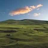 Herde der Kühe und der idyllischen Landschaft Lizenzfreies Stockbild