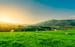 Herde der Kuh weiden lassend an der Rasenfläche mit schönem blauem Himmel und Morgensonnenlicht Kuh, die Ranch bewirtschaftet Tie lizenzfreie stockbilder