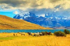 Herde der Mustangs Lizenzfreies Stockbild