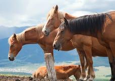 Herde der Pferde stockbild