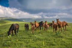 Herde der Pferde Lizenzfreies Stockfoto