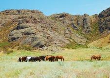 Herde der Pferde unter Bergen Stockbilder