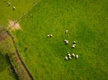 Herde der Schaf-Antenne Lizenzfreie Stockbilder