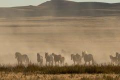 Herde der wilden Pferde stockfotos