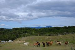 Herde der wilden Pferde stockbilder