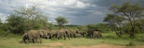 Herde des Elefanten in der serengeti Ebene lizenzfreies stockbild