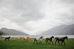 Herde des Pferdegalopps auf dem Feld Lizenzfreie Stockfotos