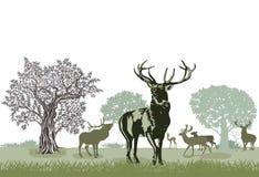 Herde des Rotwilds lizenzfreie abbildung