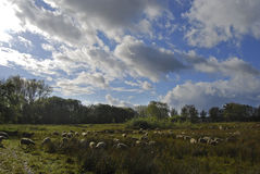 Herde in einer Naturlandschaft Lizenzfreie Stockbilder