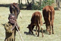 Herde flicka, med nötkreatur i sökande av gräs Arkivfoton