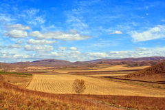 herde- landskap Royaltyfri Fotografi