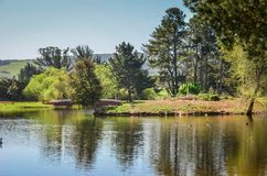 Herde- nordliga Kalifornien Royaltyfria Foton