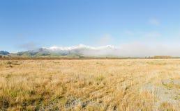 Herde- plats i den nyazeeländska södra ön för ` s Royaltyfri Fotografi