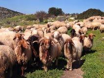 Herde und der Schäferhund Lizenzfreie Stockfotos