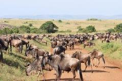 Herde von Antilopen Gnu. Lizenzfreie Stockbilder