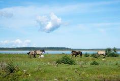 Herde von den Pferden, die in der Wiese weiden lassen lizenzfreie stockfotos