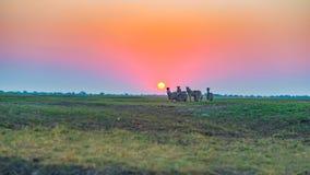 Herde von den Zebras, die in den Busch in der Hintergrundbeleuchtung bei Sonnenuntergang gehen Szenisches buntes Sonnenlicht am H Stockfoto