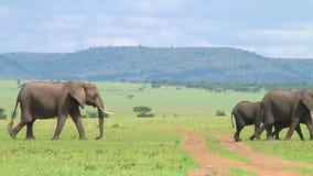 Herde von Elefanten das Serengeti
