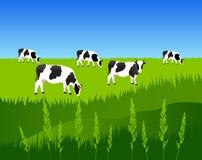 Herde von Kühen auf der Wiese Stockfotos