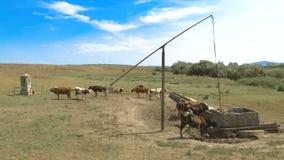 Herde von Kühen auf einem Brunnen stock video footage