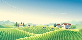 Herde von Kühen in der ländlichen Landschaft des Sommers lizenzfreie abbildung