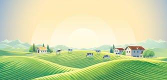 Herde von Kühen in der ländlichen Landschaft des Sommers stock abbildung