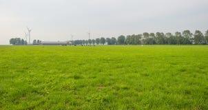 Herde von Kühen in einer grünen Wiese im Sonnenlicht im Sommer stockbild