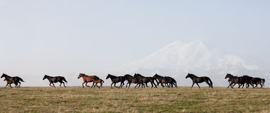 Herde von Pferden auf einer Sommerweide Stockfotografie