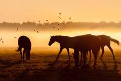 Herde von Pferden bei Sonnenaufgang, über dem eine Menge des Vogels fliegt Lizenzfreies Stockfoto
